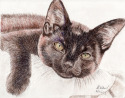 Brown Cat (thumbnail)