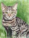 Striped Cat (thumbnail)