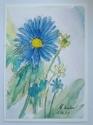 Blue  Daisies  (thumbnail)