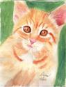 Orange Kitten (thumbnail)
