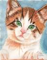 Bold Kitten (thumbnail)