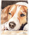 Beagle (thumbnail)