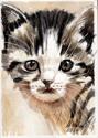 Cute Kitten (thumbnail)
