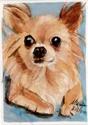Chihuahua (thumbnail)