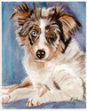 Austrailian Shepherd (thumbnail)