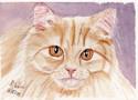 Kitten (thumbnail)