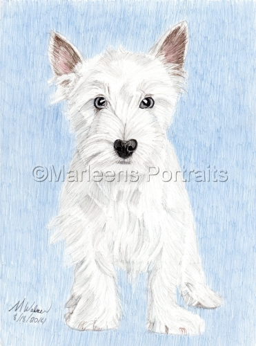 Westie (large view)