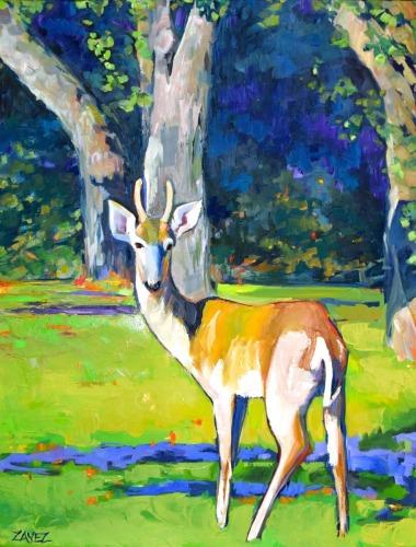 Oh Deer! by Marsha Zavez