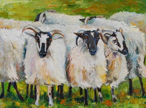 grouped sheep