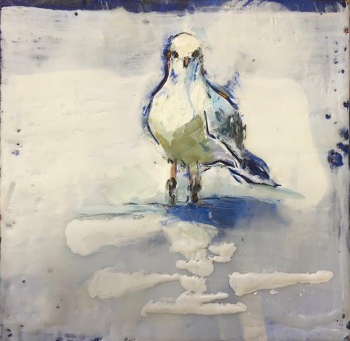 Prussian Gull