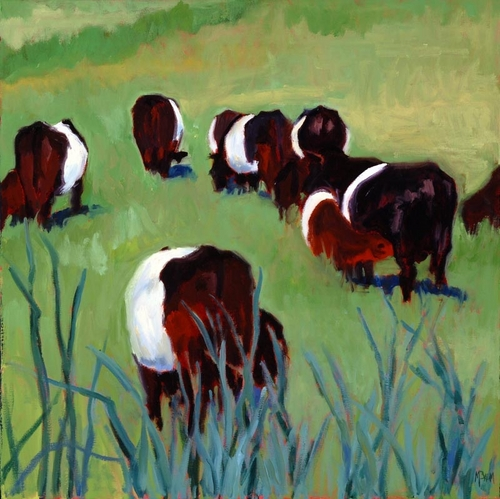 Belted Galloways II (large view)