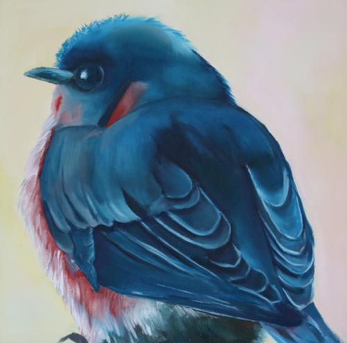 Hayden's Bluebird