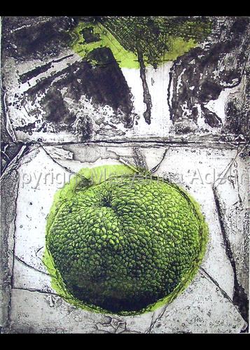 Osage Orange #2 by Maryanna Adelman