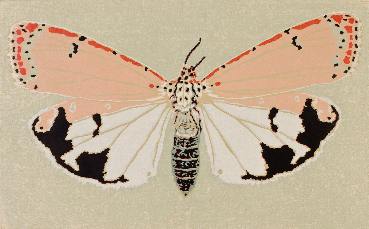 Moth Seven (large view)