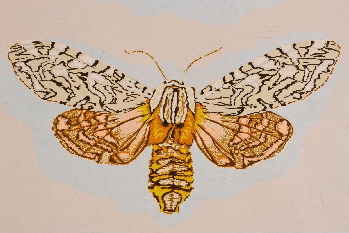 Moth Twelve (large view)