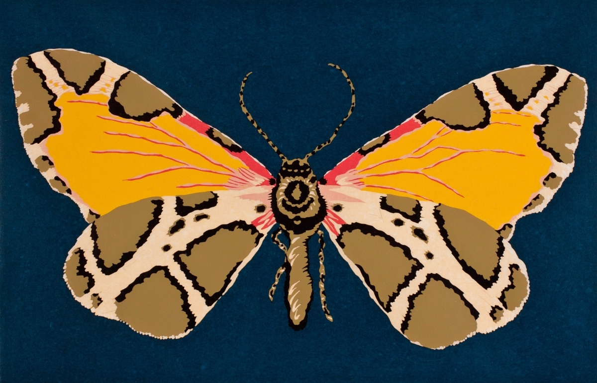 Moth Thirteen (large view)