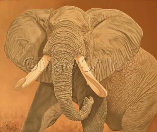 African Elephant  by Mary C Allen