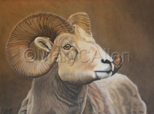Big Horn Sheep by Mary C Allen