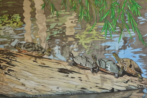 Watercolor Turtles on Log by Mary C Allen