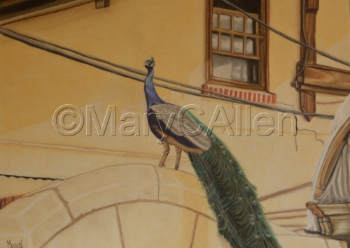 Pastel Urban Peacock by Mary C Allen