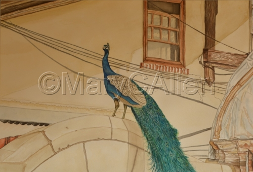 Watercolor Urban Peacock