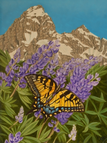 Swallowtail in the Tetons  by Mary C Allen