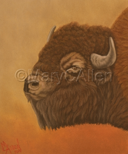 Bison by Mary C Allen