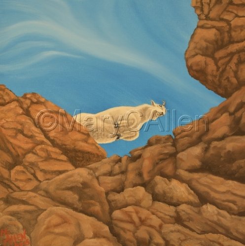 Mountain Goat by Mary C Allen