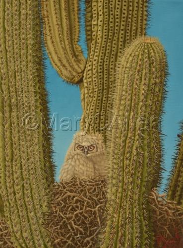 Saguaro Owl