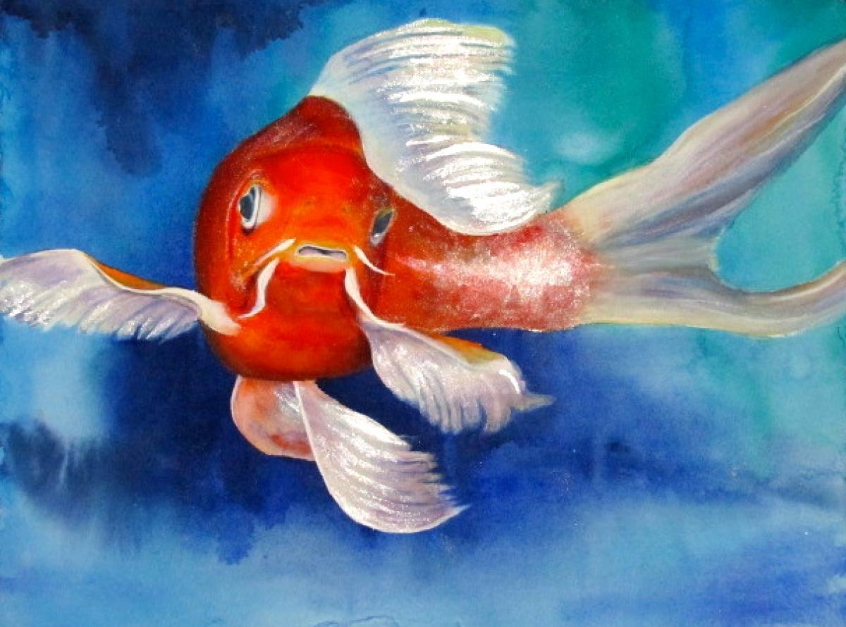 Goldfish (large view)