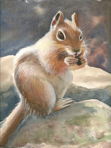 Chipsquirrel by MARY EDWARDS WATERCOLORS