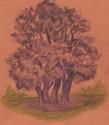 Portrait of a Tree (thumbnail)