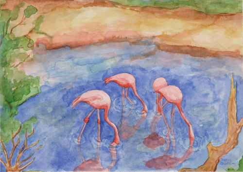 Galapagos Island Series: Flamingos