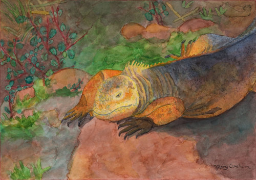 Galapagos Island Series: Land Iguana