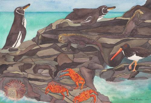 Galapagos Life