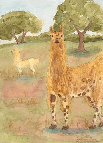 Llamas, Rose Hill Manor
