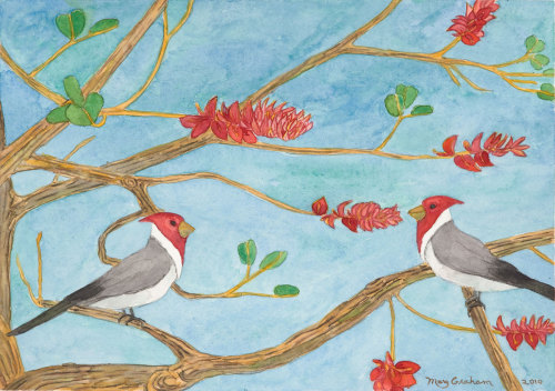 Red Headed Cardinals