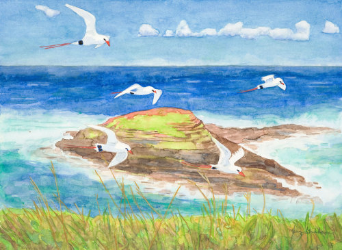 Red Tailed Tropic Birds