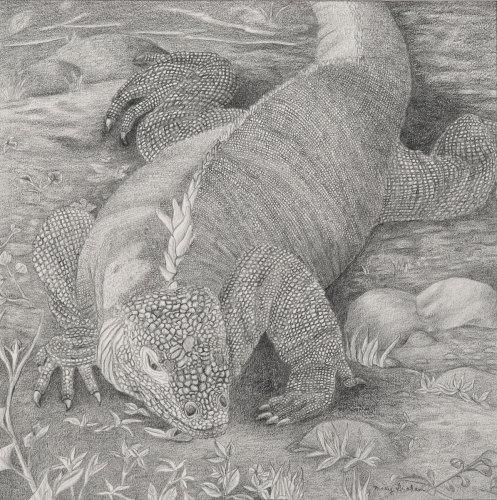 Galapagos Island Series: Land Iguana  by Mary Muskus Graham