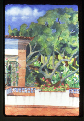 Cork Oaks by Mary Muskus Graham