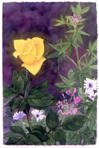 Amanda's Rose