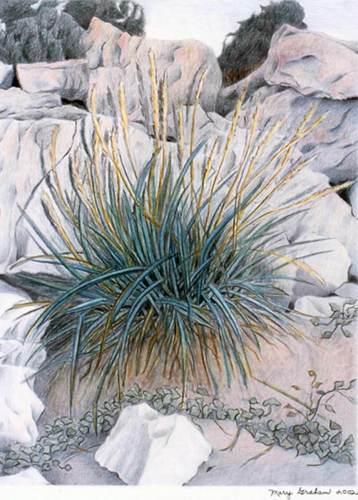 Beach Grass #1
