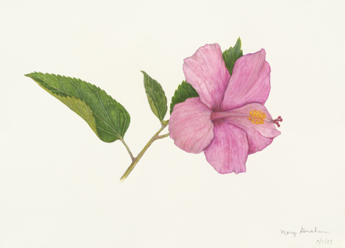 Pink Hibiscus Giclee
