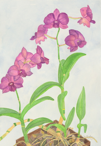 Orchid Giclee