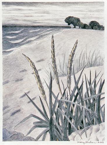 Beach Grass #2