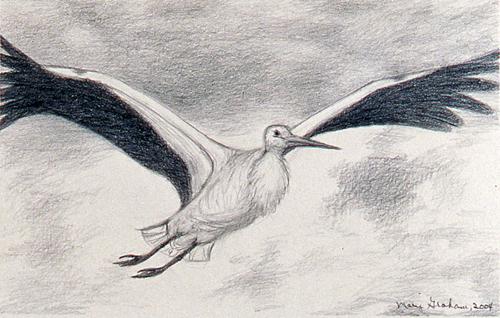 White Stork Study