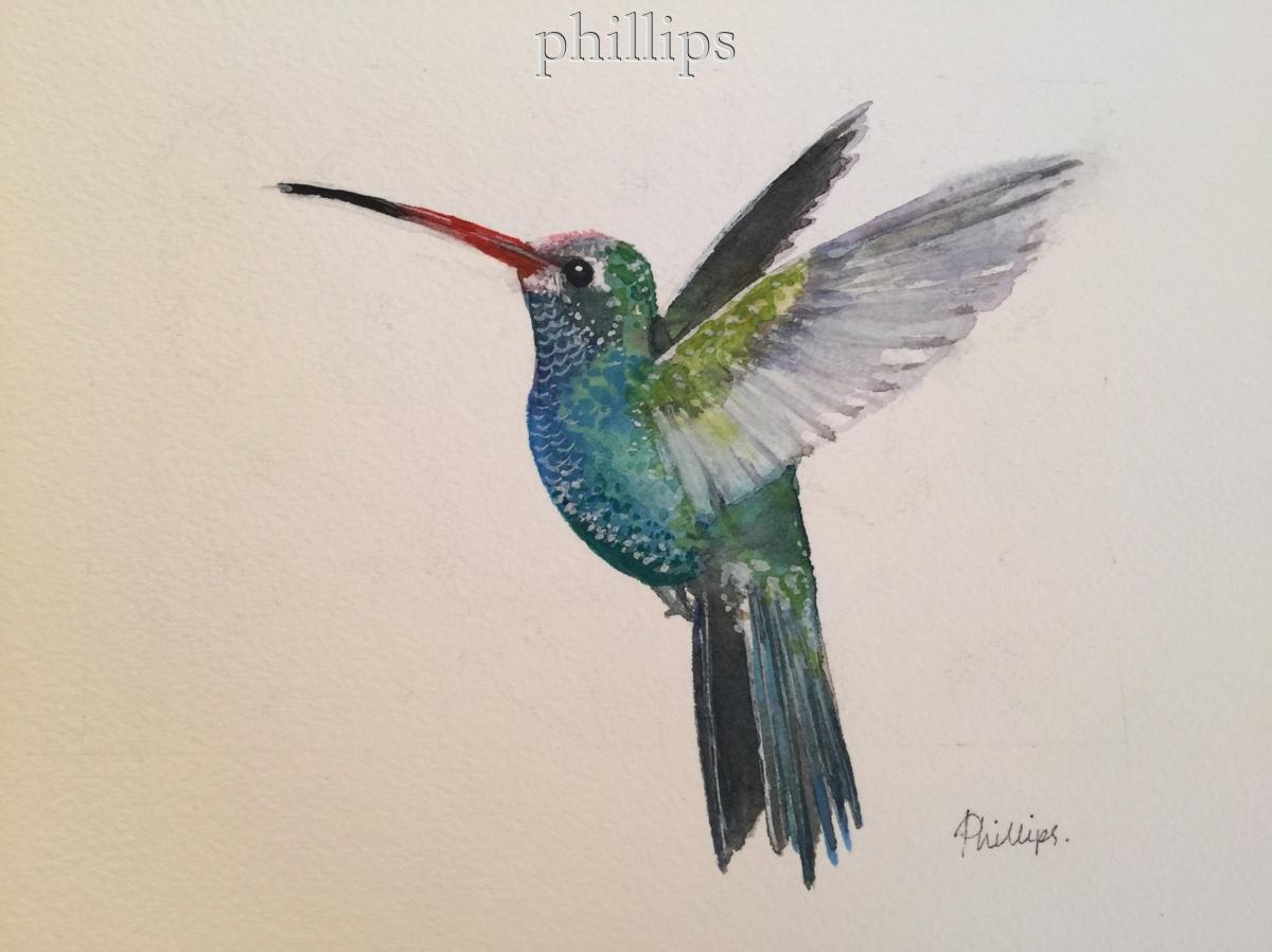 Hummingbird#1 (large view)