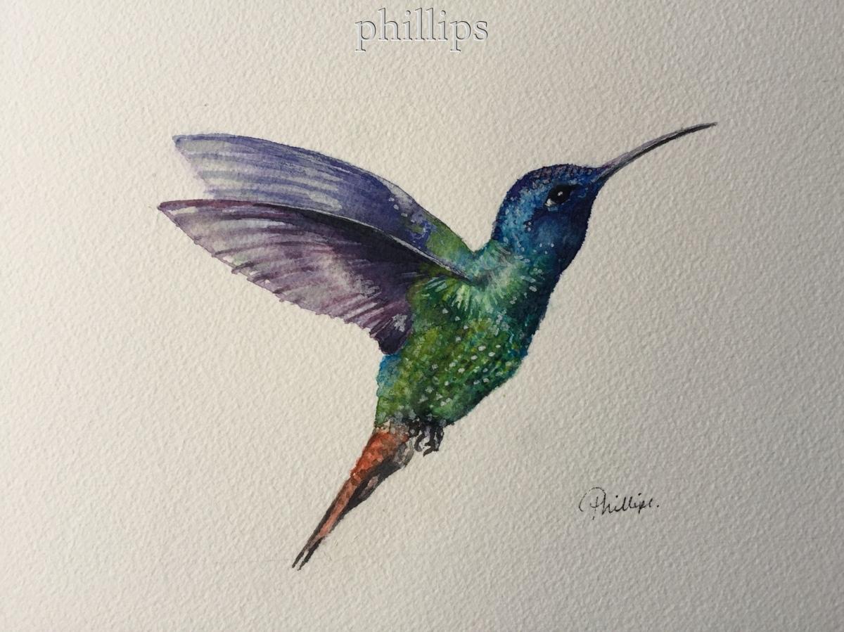 Hummingbird #3 (large view)