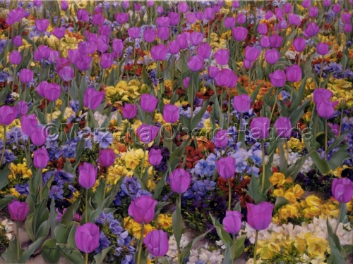 Spring Colors Spectrum