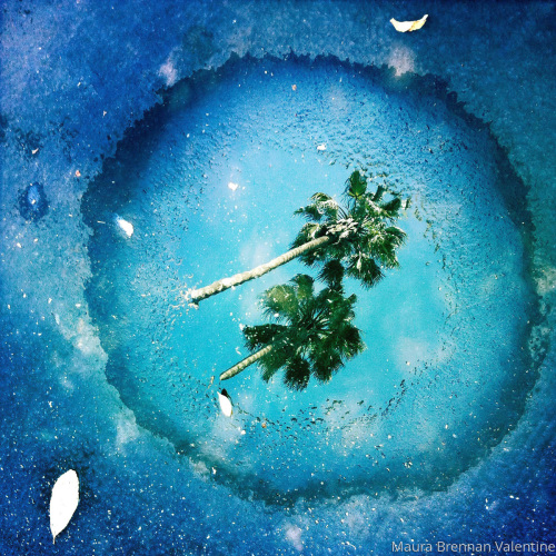 Blue Puddle with Palms